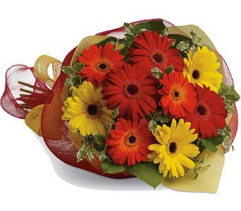 Mixed Gerbera Bouquet in Cornwall ON, Fleuriste Roy Florist, Ltd.