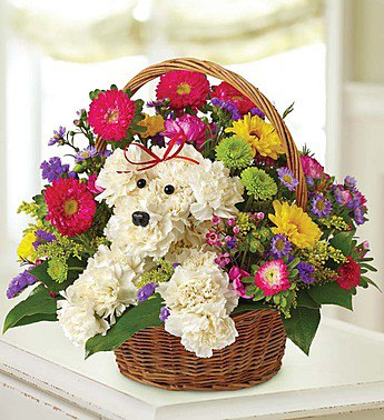 A-Dog-Able in a Basket in Camp Hill and Harrisburg PA, Pealer's Flowers