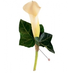 Mini Calla Boutonniere in Camp Hill and Harrisburg PA, Pealer's Flowers