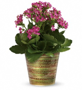 Simply Happy Kalanchoe Plant by Teleflora in Oakland MD, Green Acres Flower Basket