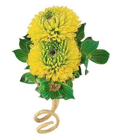 Chrysanthemum Boutonniere in Camp Hill and Harrisburg PA, Pealer's Flowers