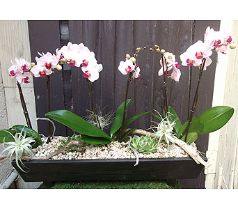 Orchid Plants & Airplants in West Los Angeles CA, Westwood Flower Garden