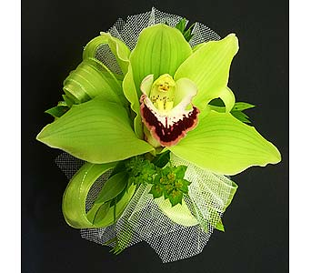 Green Cymbidium Corsage in Mesa AZ, Watson Flower Shops
