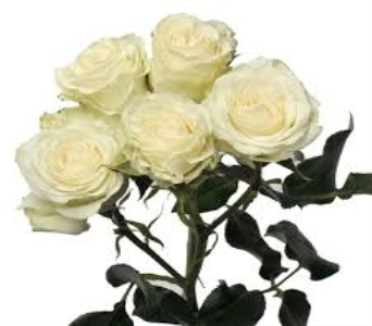White Spray Rose in Mount Dora FL, Claudia's Pearl Florist