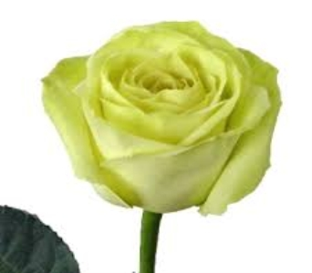 Green Rose in Mount Dora FL, Claudia's Pearl Florist