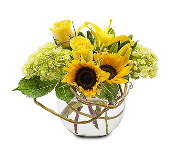 Rays of Sunshine in Tacoma WA, Blitz & Co Florist