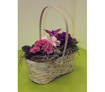 2 Violet Plants in basket in Manhasset NY, Town & Country Flowers