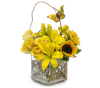 Butterfly Effect in South Hadley MA, Carey's Flowers, Inc.