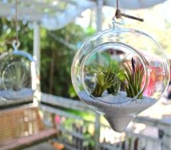 Air Plant Terrarium Garden I in Guelph ON, Patti's Flower Boutique