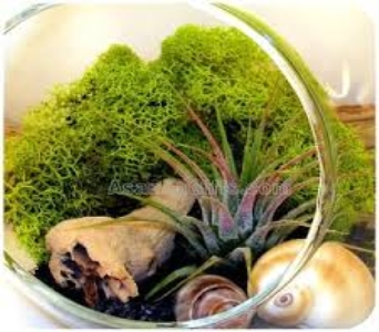 Air Plant Terrarium Garden II in Guelph ON, Patti's Flower Boutique