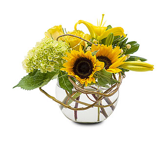 Rays of Sun in Wellington FL, Wellington Florist