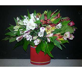 Just Because in Ft. Lauderdale FL, Jim Threlkel Florist