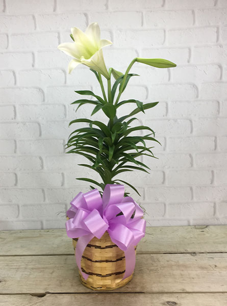 Easter Lily: Dressed in Newport News VA, Pollards Florist