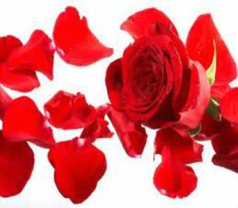 Red Rose Petals in Nashville TN, Emma's Flowers & Gifts, Inc.