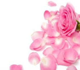 Pink Rose Petals in Nashville TN, Emma's Flowers & Gifts, Inc.