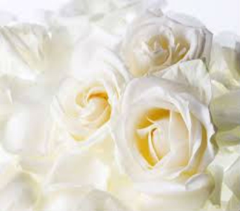 White Rose Petals in Nashville TN, Emma's Flowers & Gifts, Inc.