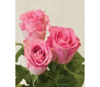 Pink Rose in Nashville TN, Emma's Flowers & Gifts, Inc.