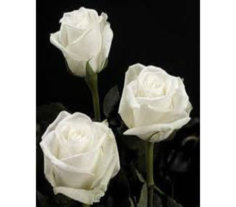 White Rose in Nashville TN, Emma's Flowers & Gifts, Inc.