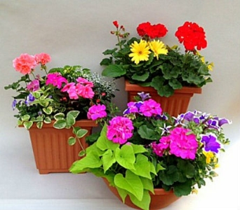 Outdoor Patio Pots in Utica NY, Chester's Flower Shop And Greenhouses