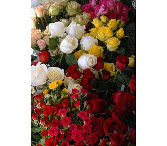 MN Grown Roses in Northfield MN, Forget-Me-Not Florist