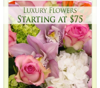 Luxury Flowers in Bradenton FL, Ms. Scarlett's Flowers & Gifts