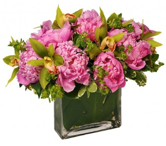 Pink Lady $125 - $225 in Bradenton FL, Ms. Scarlett's Flowers & Gifts