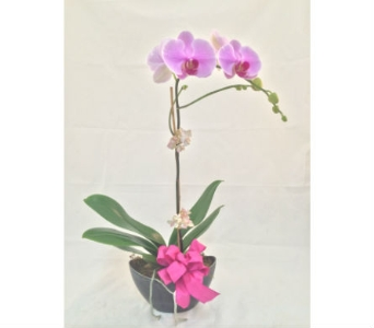orchid in modern planter in Wellington FL, Wellington Florist