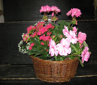 Garden Plants in Basket in Blue Bell PA, Country Flower Shoppe