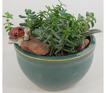 Huddart Succulent Pottery Planter in Salt Lake City UT, Huddart Floral
