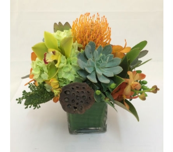 exotic cube in Wellington FL, Wellington Florist
