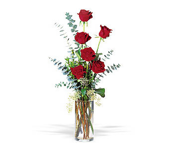 Expression of Love in Dallas TX, Petals & Stems Florist