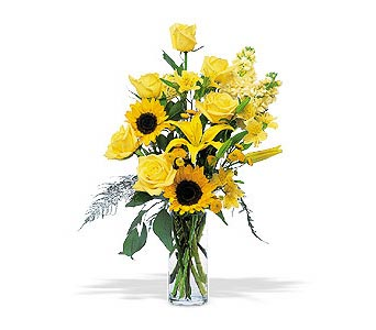 Blazing Sunshine by Petals & Stems in Dallas TX, Petals & Stems Florist