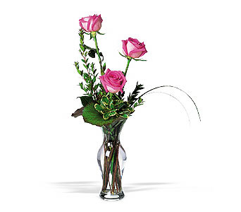 Tender Trio in Dallas TX, Petals & Stems Florist