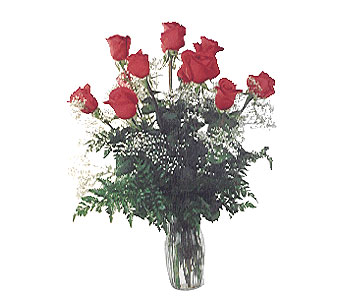 1 Dozen Wonderful Red Roses in Dallas TX, Petals & Stems Florist