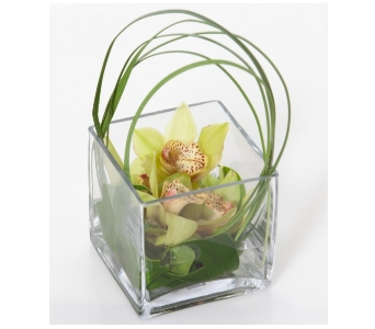 Mini Orchid Cube in Little Rock AR, Tipton & Hurst, Inc.