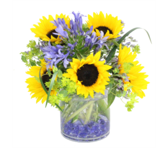 Liquid Sunshine By Bell Flowers in Silver Spring MD, Bell Flowers, Inc