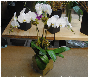 Triple Orchid Delight in New York NY, Starbright Floral Design