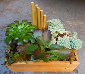 Succulent Zen Garden in New York NY, Starbright Floral Design