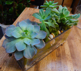Succulent Sanctuary in New York NY, Starbright Floral Design