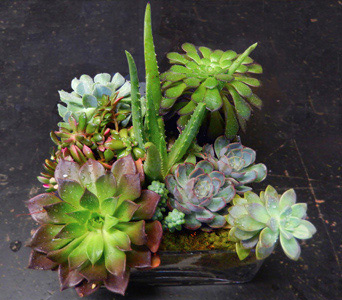 Succulent Glass Menagerie in New York NY, Starbright Floral Design