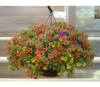 Million Bells Hanging Basket in Waverly NY, Jayne's Flower Shop