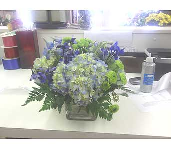 Hydrangeas in Charlotte NC, Starclaire House Of Flowers Florist