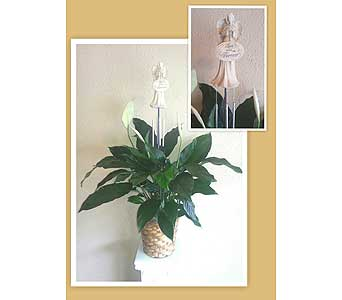 Peace Lily Plant with Angel Wind Chime in Nashville TN, The Bellevue Florist