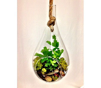 Teardrop Terrarium in Greeley CO, Mariposa Plants & Flowers