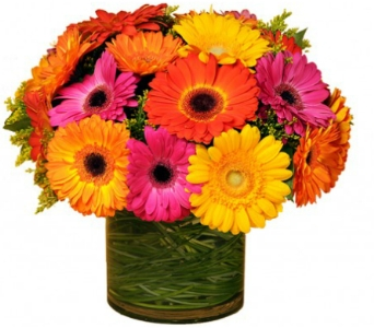 Bold and Beautiful $75-$125 in Bradenton FL, Ms. Scarlett's Flowers & Gifts