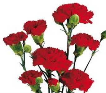 Red Mini Carnation in Mount Dora FL, Claudia's Pearl Florist