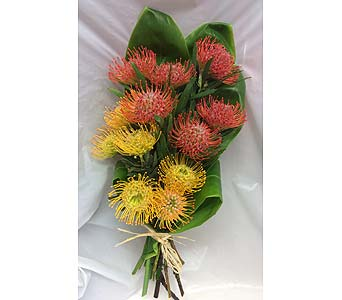 Dozen Pin Cushions in Kihei HI, Kihei-Wailea Flowers By Cora