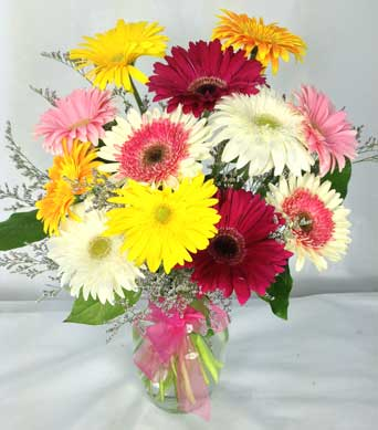 GERBERAS GALORE by Rubrums in Ossining NY, Rubrums Florist Ltd.