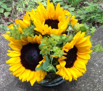Sunny Side Up in Guilford CT, Guilford White House Florist