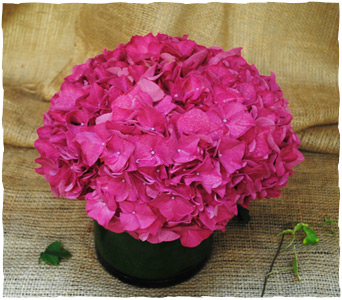 Pretty in Pink Hydrangea in New York NY, Starbright Floral Design